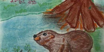 Przygody bobra Freda