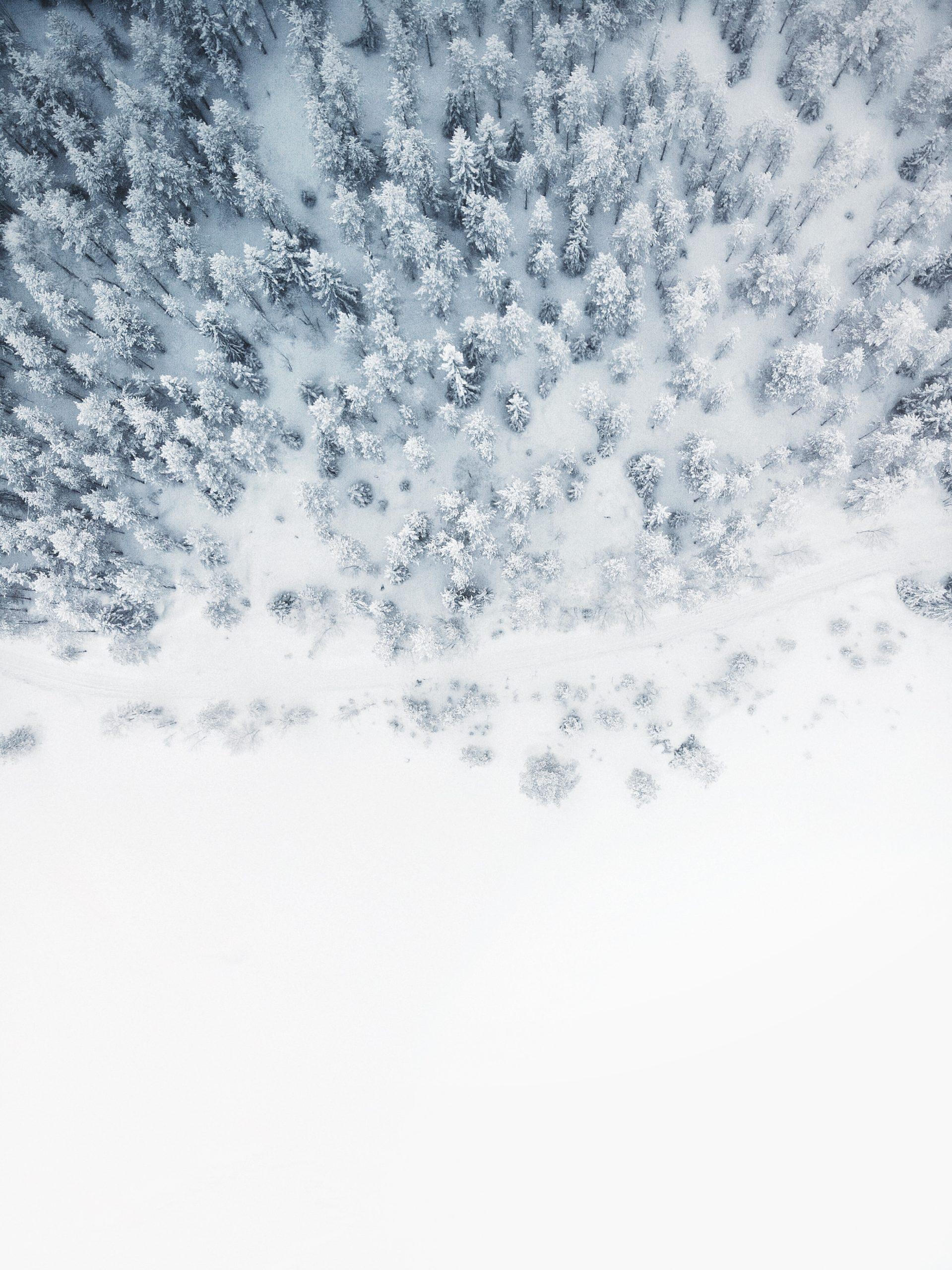 Zimowa rozłąka Kurczaczka i Myszki